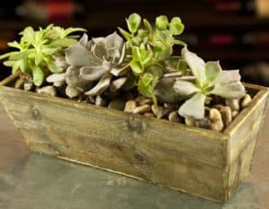 This serene succulent garden features an array of unique ornamental plants, offering a variety of textures in a stylish wood-grain container.